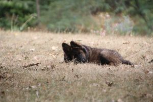 comme chiens et loups0157