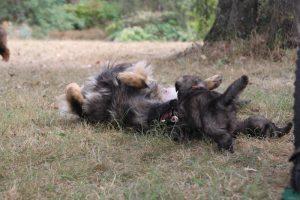 comme chiens et loups0158