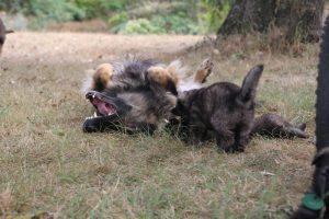 comme chiens et loups0160