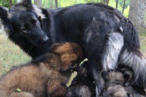 comme chiens et loups0185