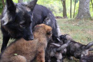comme chiens et loups0186