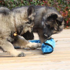 jouet peluche chiot altdeutscher schaferhund
