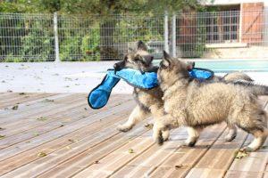 IMG_7945-altdeutcher schaferhund