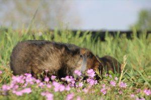 comme-chiens-et-loups0047