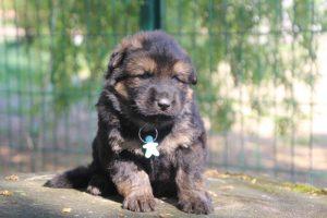 comme-chiens-et-loups0133