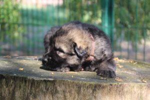 comme-chiens-et-loups0142