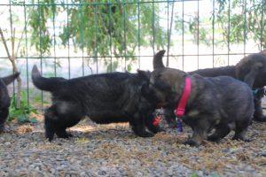 comme-chiens-et-loups0168