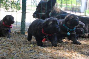 comme-chiens-et-loups0172