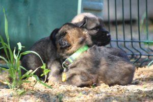 comme-chiens-et-loups0184