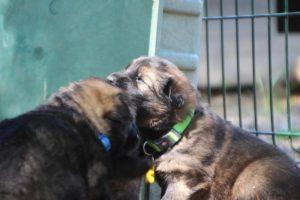 comme-chiens-et-loups0189