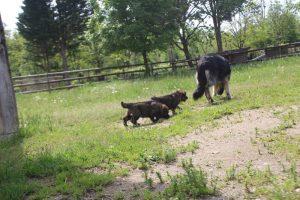 comme-chiens-et-loups0021