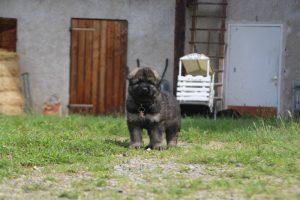 comme-chiens-et-loups0041