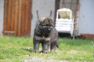comme-chiens-et-loups0043