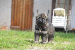 comme-chiens-et-loups0044
