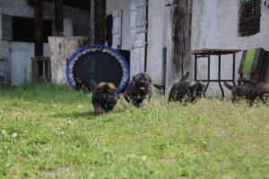 comme-chiens-et-loups0062
