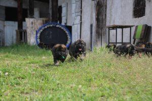 comme-chiens-et-loups0064