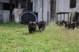 comme-chiens-et-loups0065