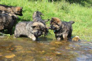comme-chiens-et-loups0073