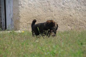 comme-chiens-et-loups0074