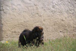 comme-chiens-et-loups0076