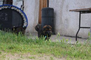 comme-chiens-et-loups0089