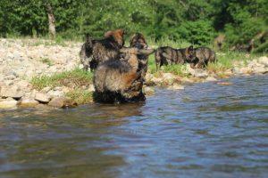 comme-chiens-et-loups0092