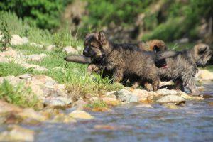 comme-chiens-et-loups0096