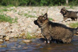 comme-chiens-et-loups0098