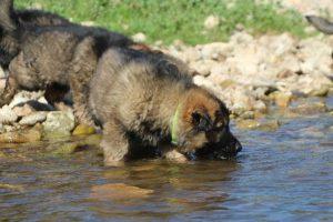 comme-chiens-et-loups0102