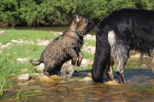 comme-chiens-et-loups0113