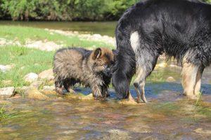 comme-chiens-et-loups0114