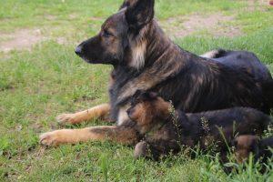 comme-chiens-et-loups0121