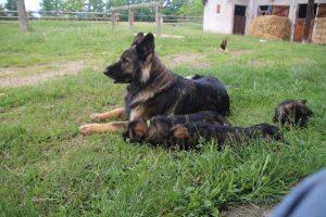 comme-chiens-et-loups0124