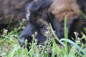 comme-chiens-et-loups0125
