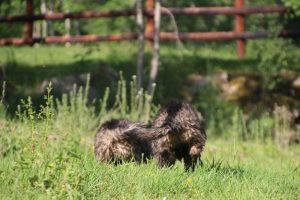 comme-chiens-et-loups0128