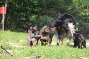 comme-chiens-et-loups0132
