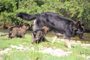 comme-chiens-et-loups0134