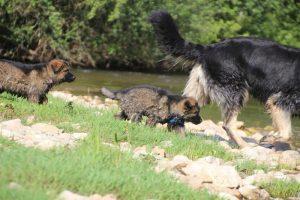 comme-chiens-et-loups0135