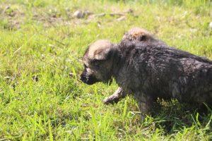 comme-chiens-et-loups0138