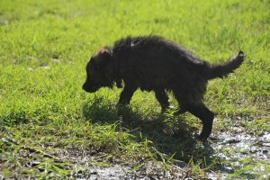 comme-chiens-et-loups0140