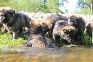 comme-chiens-et-loups0151
