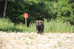 comme-chiens-et-loups0153