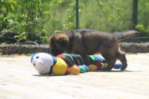 comme-chiens-et-loups0156