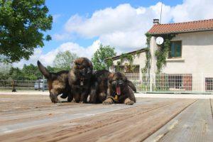 comme-chiens-et-loups0157