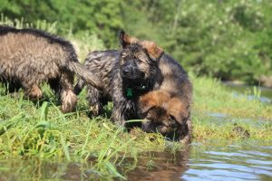 comme-chiens-et-loups0160