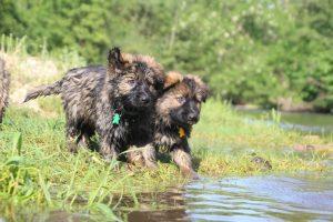 comme-chiens-et-loups0161