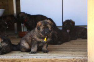 comme-chiens-et-loups0163