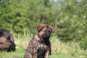 comme-chiens-et-loups0165