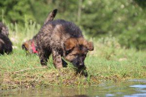 comme-chiens-et-loups0166