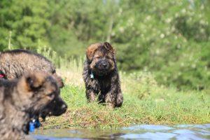 comme-chiens-et-loups0175